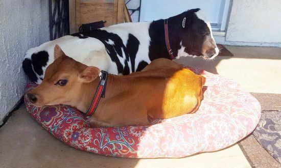 compassion_for_animals_calvin_and_nemo