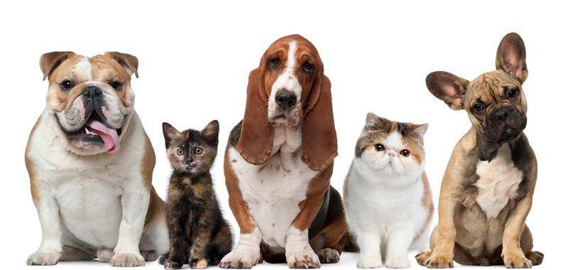 reiki_for_animals_2