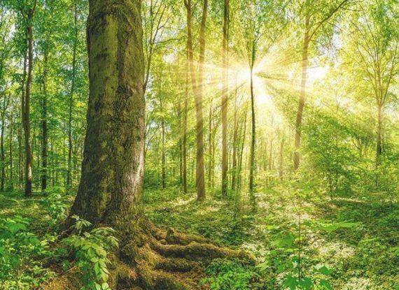 Free Reiki Energy Transfer
