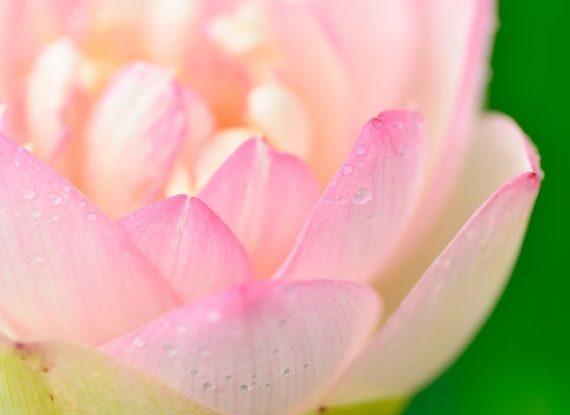 21 Taras Meditations