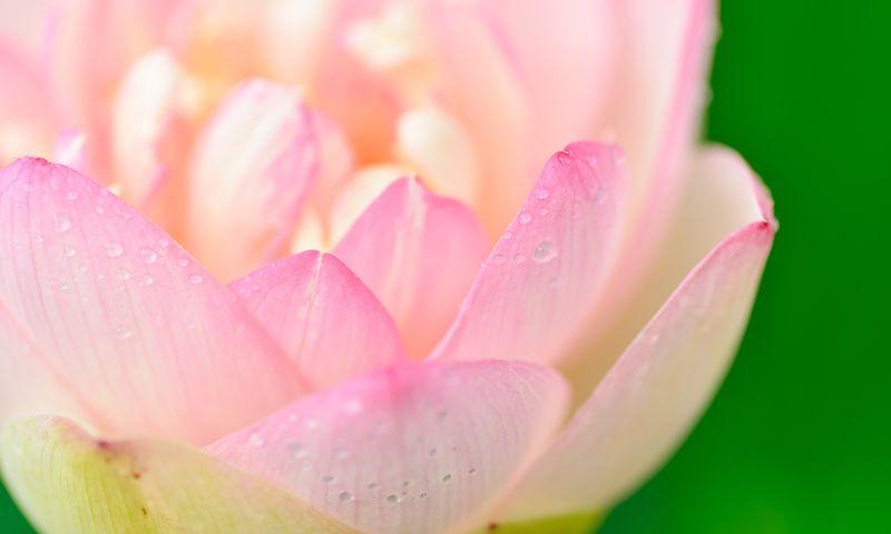21 Taras Meditations - Online Meditations